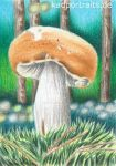 Mushroom - ACEO #45 - colored pencil drawing by kad-portraits