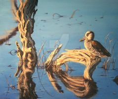 Lake Claremont: Pink-Eared Duck by napalmnacey