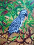 African Grey by littlekelly
