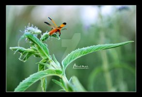 Flowers $ Insect by Ahmed-Matrix