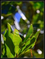 Spider web 2 by Purple-Dragonfly-Art