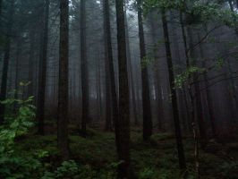 Fog in deep forest II by Vrolok-stock