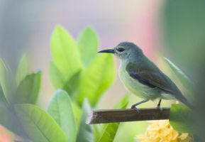 Bird from Flores by AngiWallace