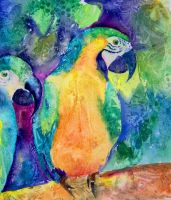 Two parrots by Radina-M