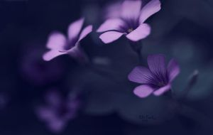 Untitled by ChiFeng-dA