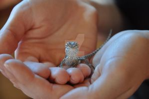 baby Bearded Dragon by OutbackAustralia