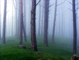 Misty scottish woods by Ballisticvole