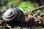 snail of the forest by owlbird