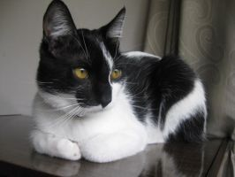 Keiko the cat by Hirok-A