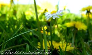 Sun in the grass by TheLarii