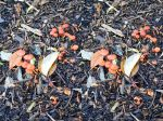 Stereoscopic Mushrooms Under A Tree In Kew Gardens by aegiandyad