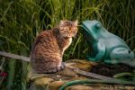 No kiss for the frog today by brijome