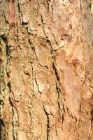 Tree Bark VIII by witchfinder-stock