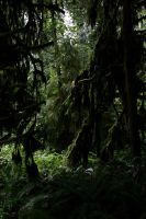 Canada - Cathedral Grove by puppeteerHH