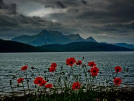 Ben Loyal In Bloom by derekbeattieimages
