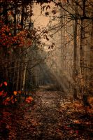 Forest tranquility II by tomsumartin