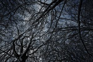 Canopy of dark veins by Z-GrimV