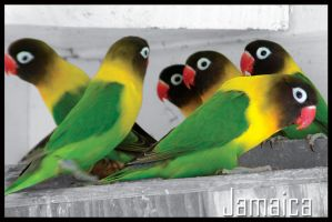 Birds of Jamaica by robertfarr