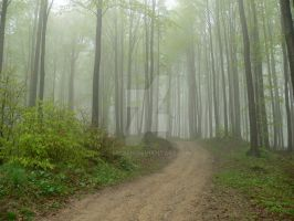 Forest in fog by 75ronin