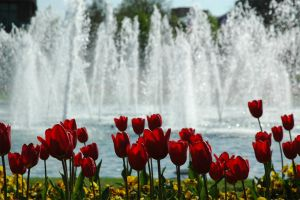 Flower Fountain by phq