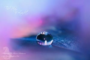The Play of Light by Gryphonia