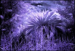 Primeval Forest Infrared... by MichiLauke