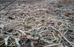 Straw Floor Ground Cover Stock by Meta-Stock