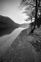 Alder Trees on Loch Loman by carlosthe