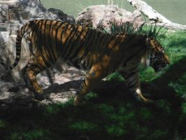 Tiger in the shade by Sweetnessnina