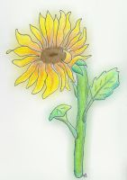 sunflower2 by MyriamRockGirl