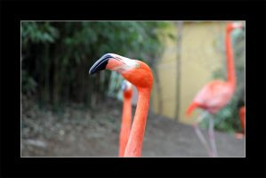 Flamingo by cluster5020