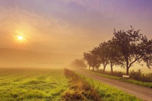 golden morning fog by artmobe