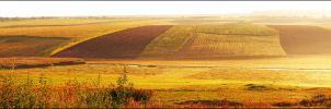 Fields of Gold by Lady-Mystica