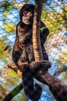 Crested Capuchin by servilonus
