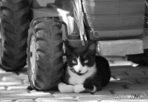 black and white by Dyda81