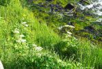 Yellowstone National Park Grasses by Trisaw1