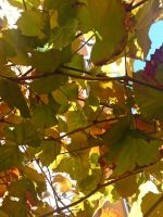 Autumn 09 at home 1 by dpt56
