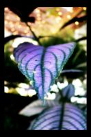 Natures Purple Heart by nw15062