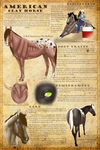 The American Clay Horse Main Breedsheet *NEW* by 11IceDragon11