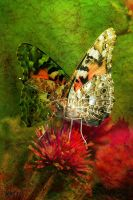 Butterfly on Flower by Tackon