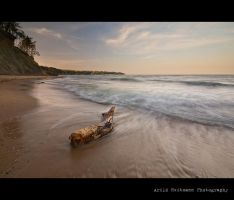 Driftwood by the Black Sea... by uberfischer