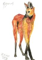 Maned Wolf by SangVarg