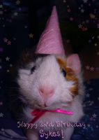 Birthday Pig: Sykes with a Hat by xxkimistarr
