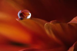 Drop.. by AlFuraih