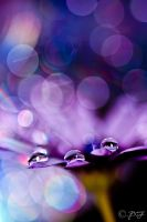 Drops in Bokeh by 89-RAW-89