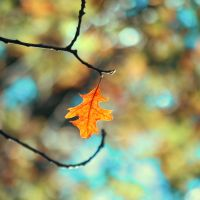 Last To Fall by incolor16