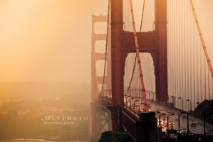 Golden by Alyphoto