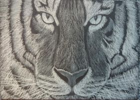 Tiger - white charcoal on black paper by THfreaken