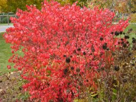 Canadian Fall Colours 35 by Aswang301