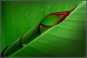 green leaf by limbonic78